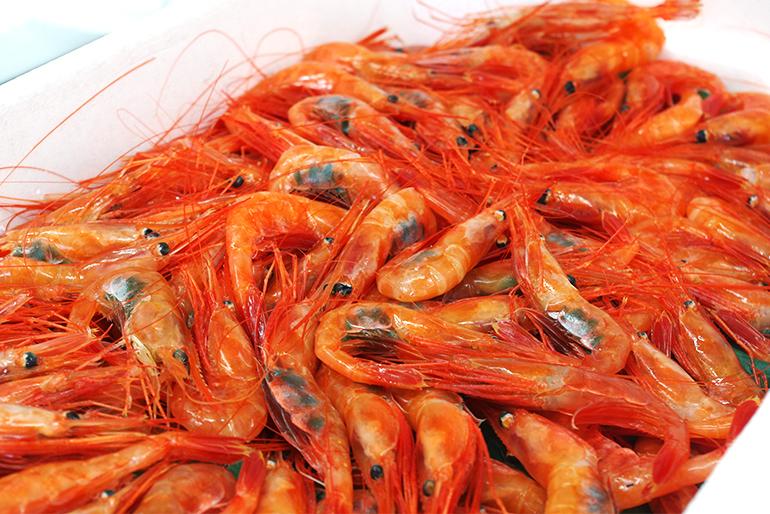 新潟ならではの海の幸「南蛮エビ」を直送
