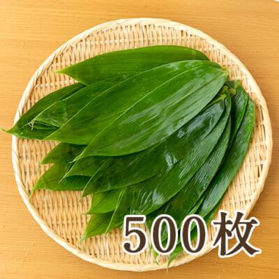 下田産 笹の葉 500枚