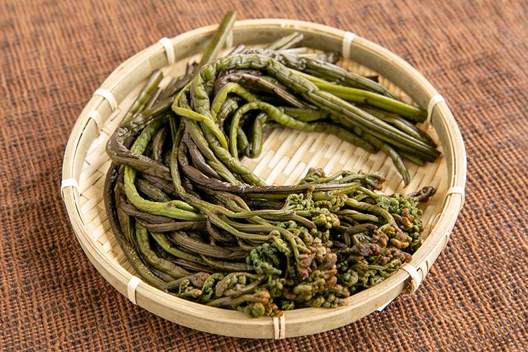 春の味覚「ワラビ」を昔ながらの製法で塩漬け