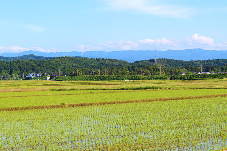 雪解け水の恩恵を受けた米栽培