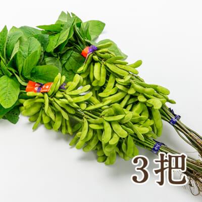 新潟県産 枝豆「弥彦むすめ」3把
