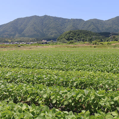 枝豆栽培に適した起伏のある地形