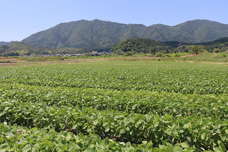 弥彦山の起伏のある地形を活かした栽培