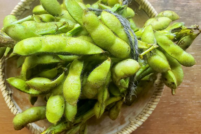 収穫期間は、わずか1週間!予約必至の枝豆です