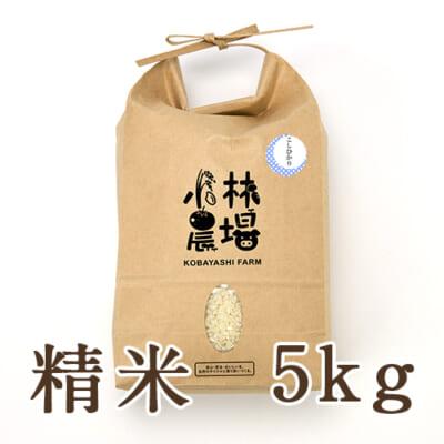 新潟産 コシヒカリ(従来品種)精米5kg