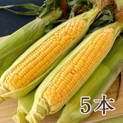 新潟県産 トウモロコシ 5本入り