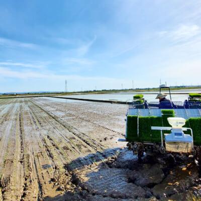 雄大な信濃川が流れる白根地区での米作り