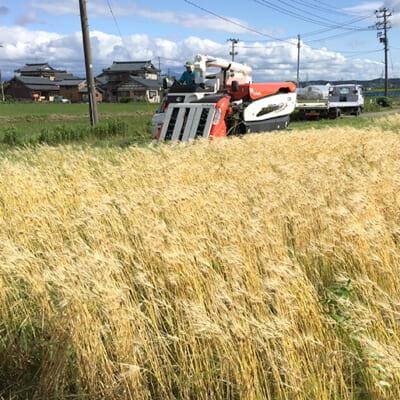 地域一丸となって取り組む「Akihaもち麦プロジェクト」