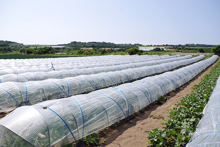 メロン栽培に最適な土壌