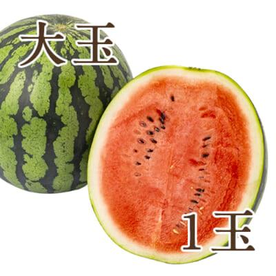 新潟県産スイカ 大玉(2L)1玉入り