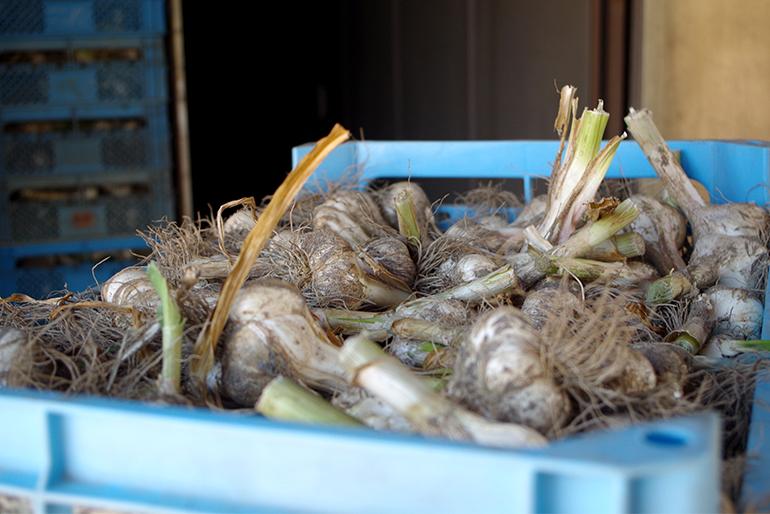 長期保存を実現させる、乾燥の工程