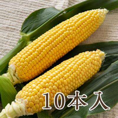 新潟県産 朝採りトウモロコシ 10本入