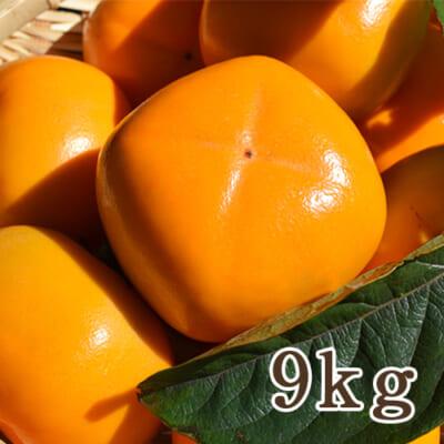 新潟県産 八珍柿 9kg