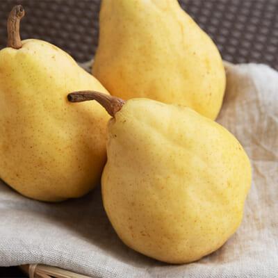 濃厚な甘み、とろける食感が人気の「ル・レクチェ」