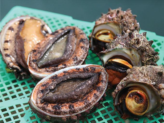 日本海側最大の島は、「おいしい」食の宝庫