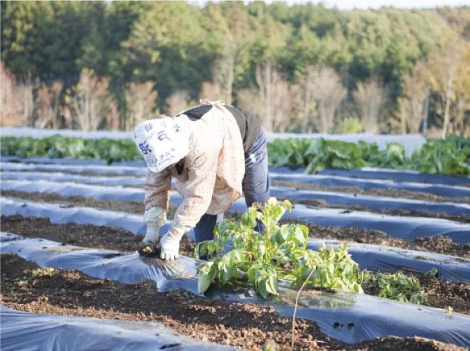 穏やかな農業地帯
