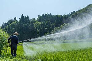3.玄米黒酢を散布。稲を健康に育てる