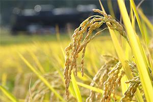 4.減農薬の取り組み。唐辛子散布と手作業で除草!