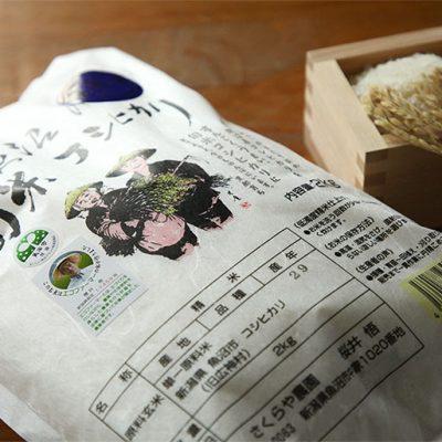 米処魚沼で育った従来品種コシヒカリ