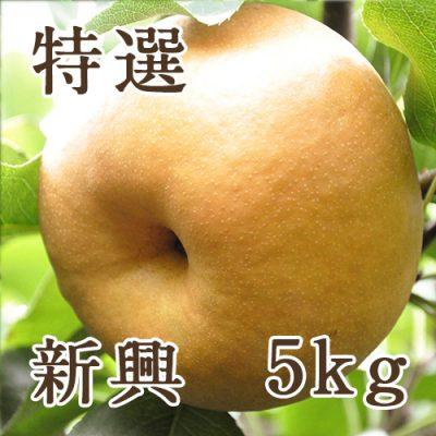 新興 特選 5kg