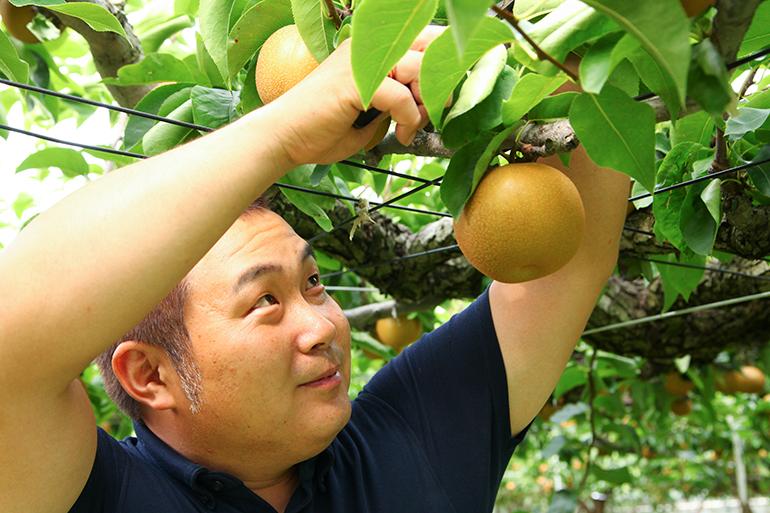 一番美味しいタイミングで収穫した果実を使用