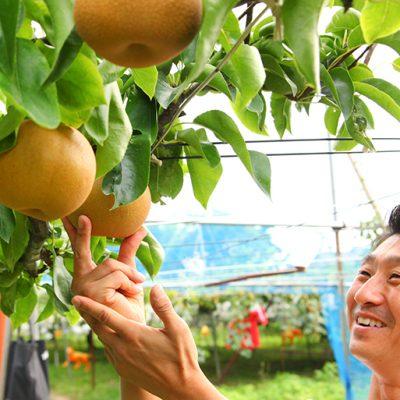 三条果樹専門家集団厳選の梨