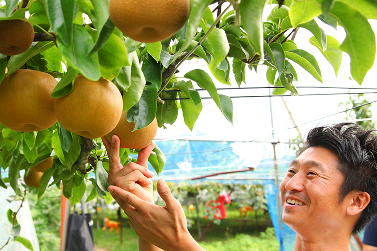大切に育てられ、厳選された日本梨を産地直送!