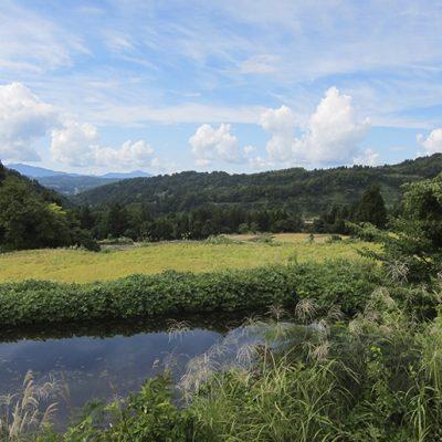令和2年度米 魚沼産コシヒカリ(棚田栽培・特別栽培米)