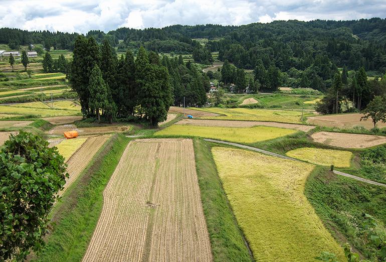 棚田米コシヒカリのうまみは「土壌・水・気候」の違い