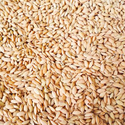 お米を生鮮食品として扱っています