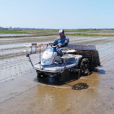 良い土壌が美味しいお米を育てます