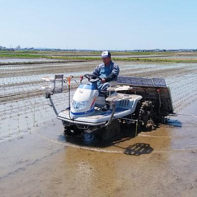 良い土壌が美味しいお米を育てる