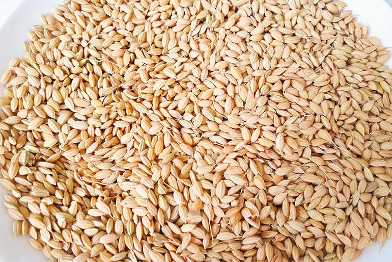 籾(もみ)貯蔵で「いつでも新米の美味しさ」