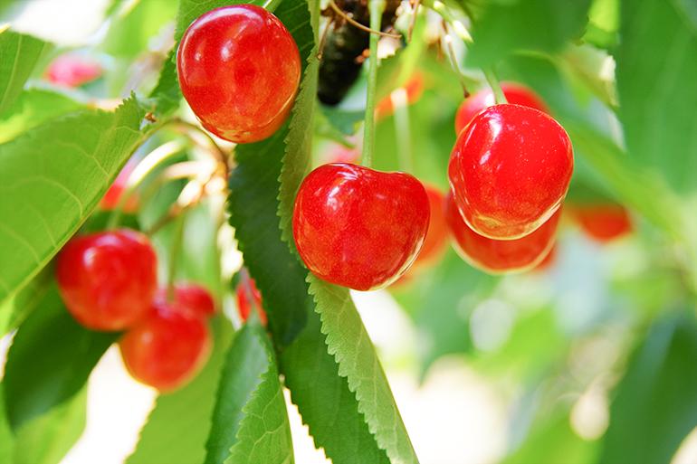 2.地球環境や生物学的な栽培方法を導入