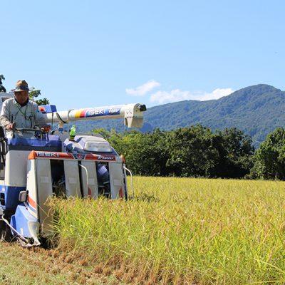 有機肥料をメインで使用