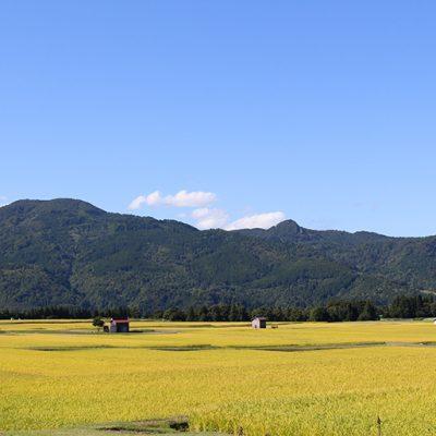 日光をたっぷり受けて育つ稲