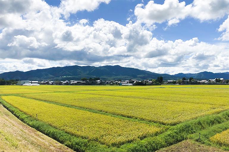 田んぼの土壌分析を徹底し、有機成分豊富な堆肥で土づくり