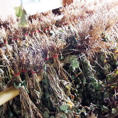 手摘みした天然の茶葉を3週間ほどかけてゆっくり自然乾燥