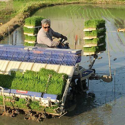 綺麗な湧き水で育てる米