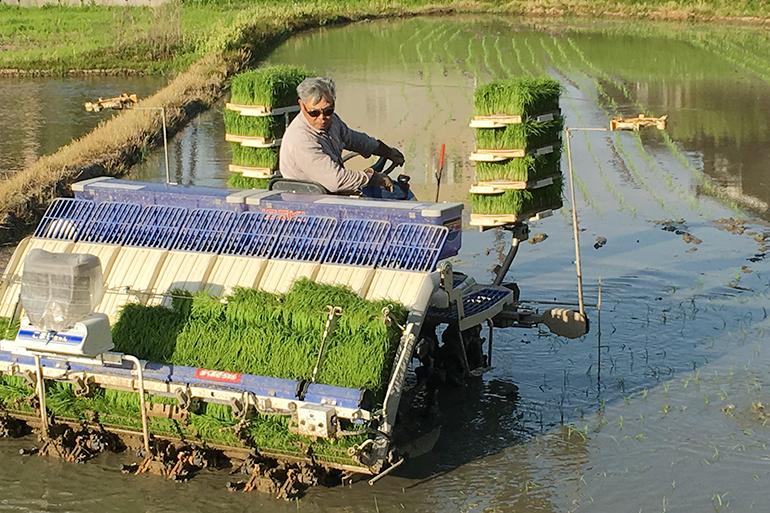 稲の力を最大限に引き出す栽培