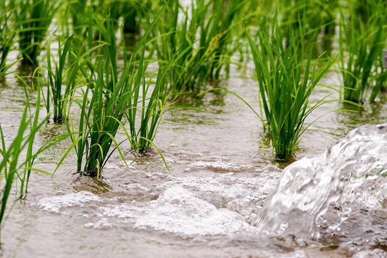 3.ミネラルたっぷりの水が注ぐ