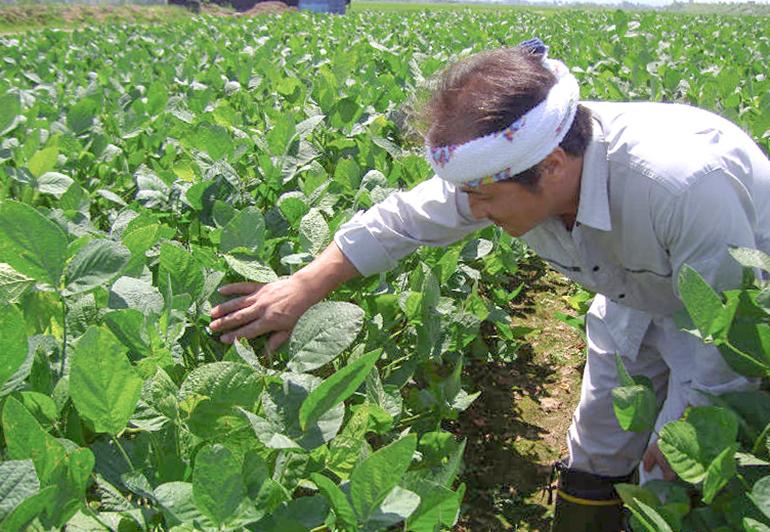 朝採りの枝豆を鮮度を保ったままお届けします!