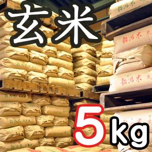 【定期購入】新潟県産こしいぶき 玄米5kg