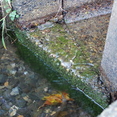 桑取川から引いた天然水
