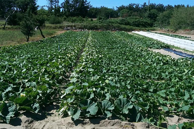 1.栽培に適した水捌けの良い砂地