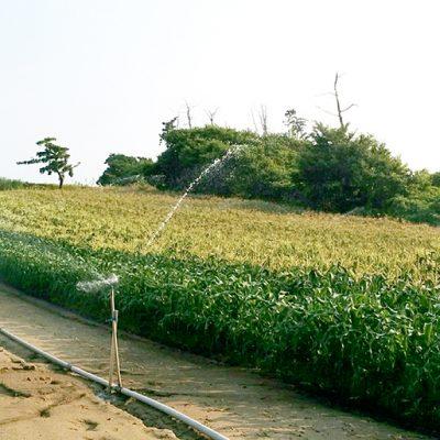 徹底した水の管理