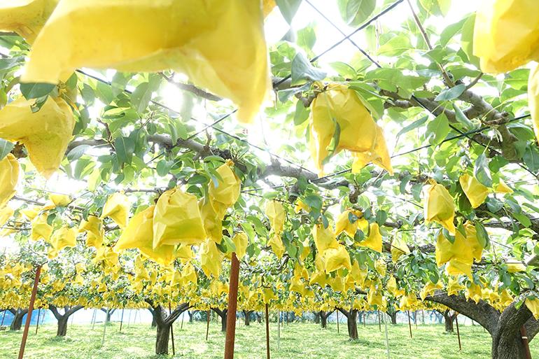 美しすぎる果樹園で育まれる極上のフルーツたち