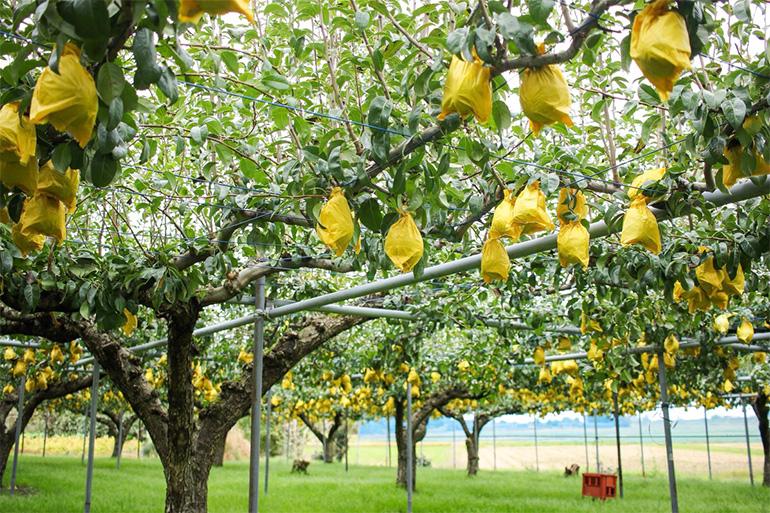 減農薬・減化学肥料で栽培