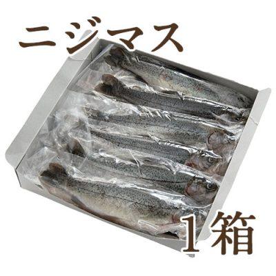 冷凍川魚 ニジマス 1箱