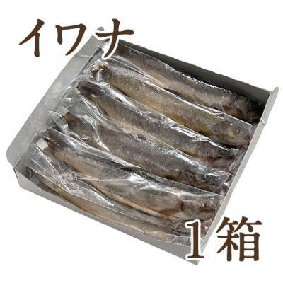 冷凍川魚 イワナ 1箱